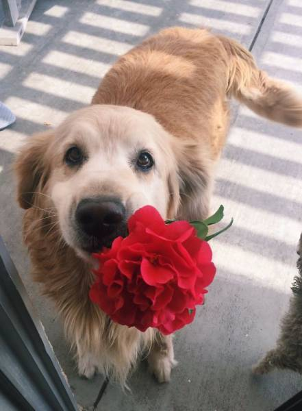 Pets Express Their Love To Humans By Bringing Them Gifts