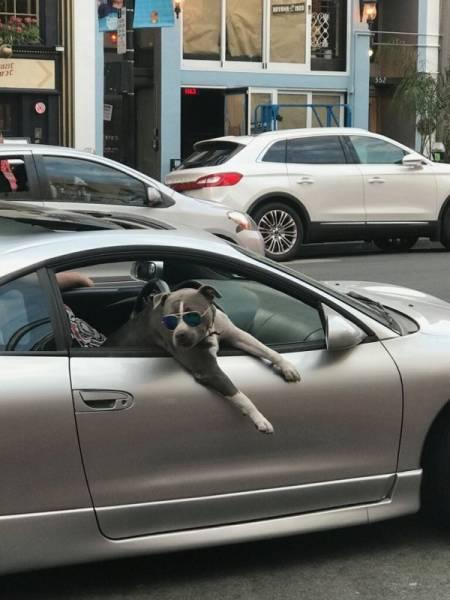 Animals Just Keep Bringing The Fun