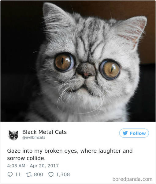 Cats Are The Best Metalheads!