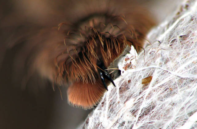 Did You Know? Spiders Actually Have Paws!