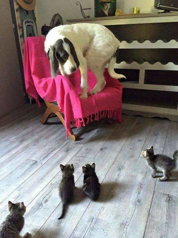 Living With Multiple Pets Can Be A Difficult Task