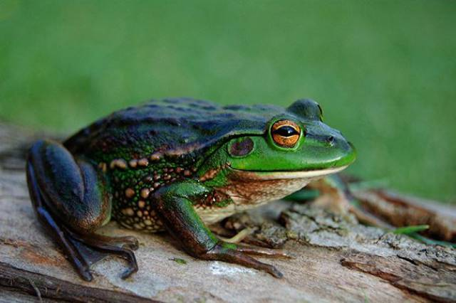 These Animals Had The Longest Lifespans Of All