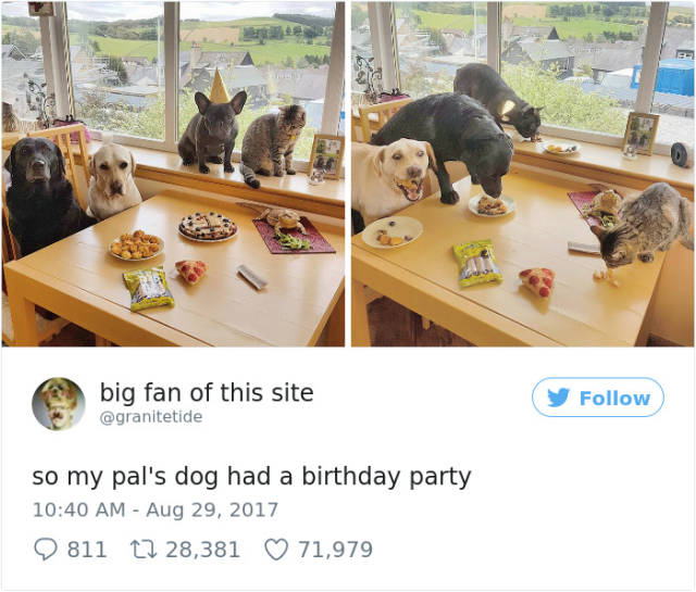 These Dogs Will Make You Envy Them