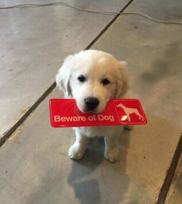 "Some ""Beware Of Dog"" Signs Might Be ""A Bit"" Misleading…"