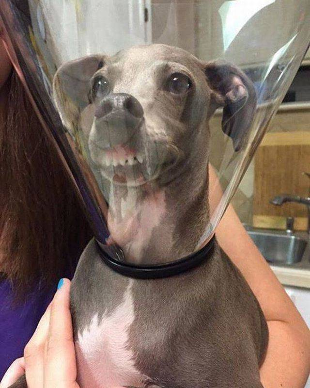 These Animals Are Quite Possibly The Funniest Things You Will See Today