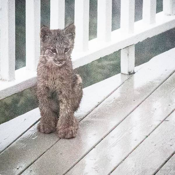 In Alaska You Should Always Be Ready To Wake Up To Some Wildlife At Your Porch