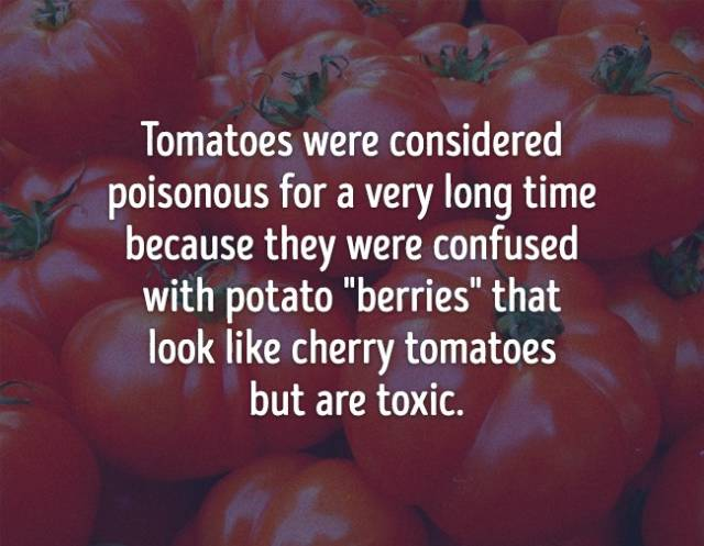 Food Facts Are As Tasty As The Food Itself