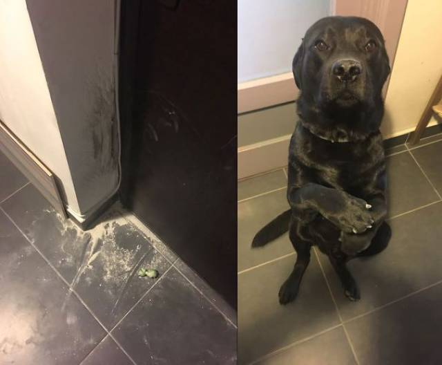 Sometimes Pets Are Total A##holes!