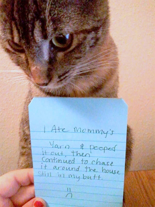 Cats Don't Give A Sh#t About Anything But Themselves