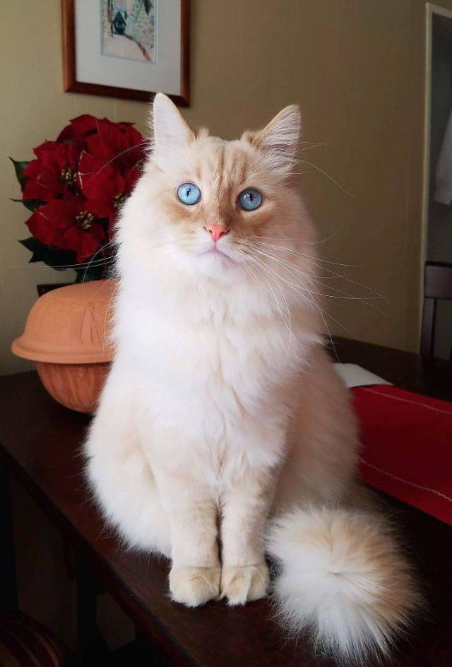 This Cat Just HAS To Be A Disney Princess!
