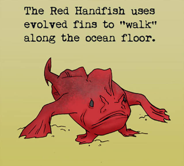 These Mysterious Animal Facts You Wouldn't Have Found Anywhere Else