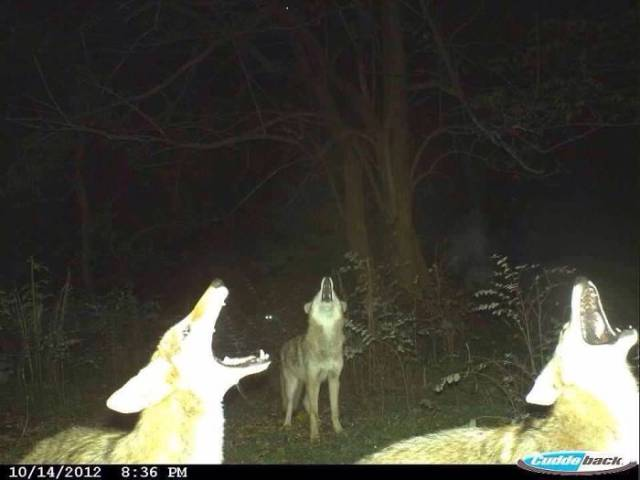 Hidden Cams Show Different Sides Of Animals