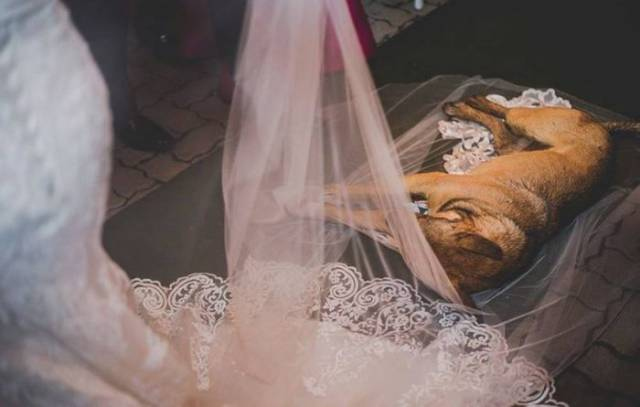 That Dog Crashed A Wedding To A Completely Unsuspected Reaction From The Newly-Weds