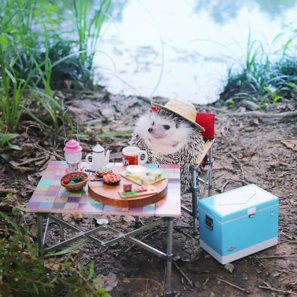 This Camping Hedgehog Is Quite Likely The Cutest Thing You've Seen In A While