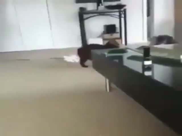 "Cat Faces A Dog In A ""Fight"""