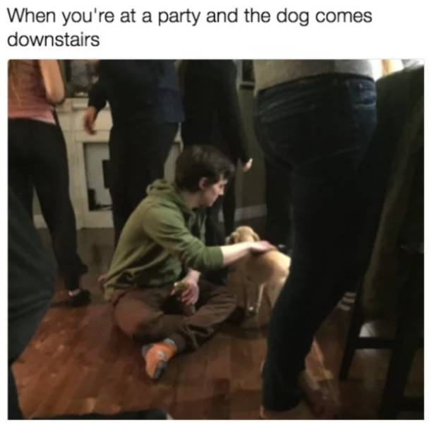 Woof! Dog Memes!