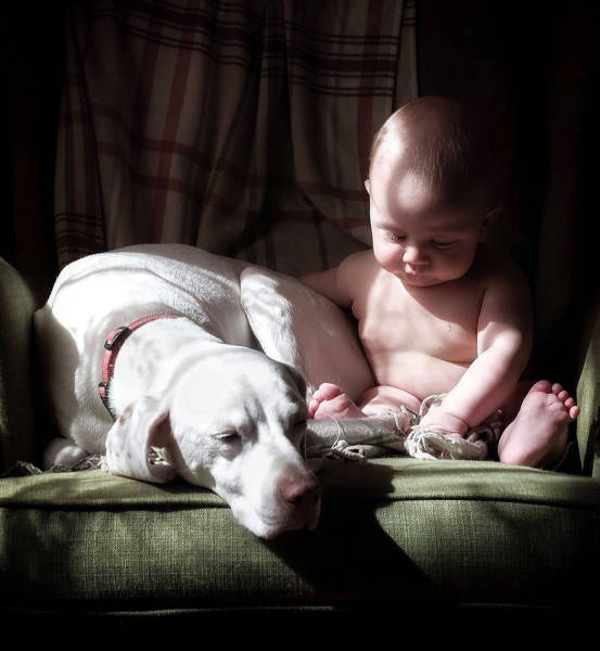 The Only Human This Abused Dog Agrees To Have Contact With Is This Little Child