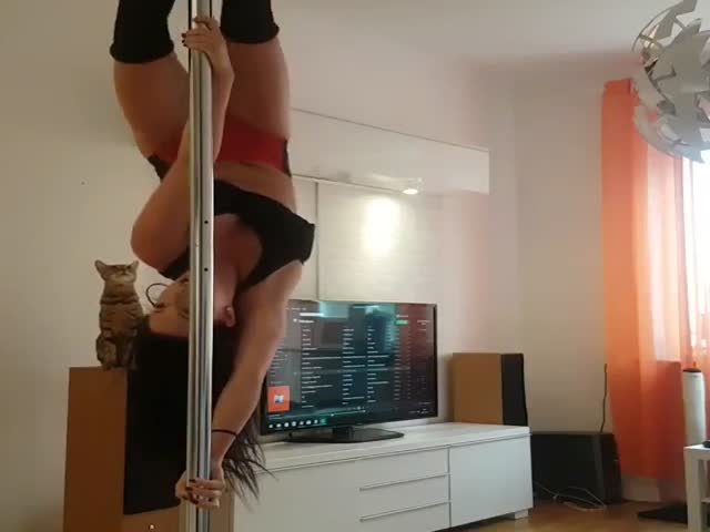 Cat Was Better Than That Sexy Pole Dancer