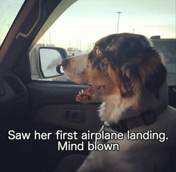 Animal Photos Are Even Funnier With Captions