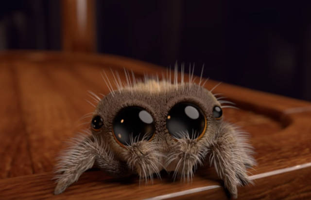 Lucas Is The First Spider You Won't Be Afraid Of