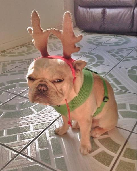 Christmas. Christmas people are coming