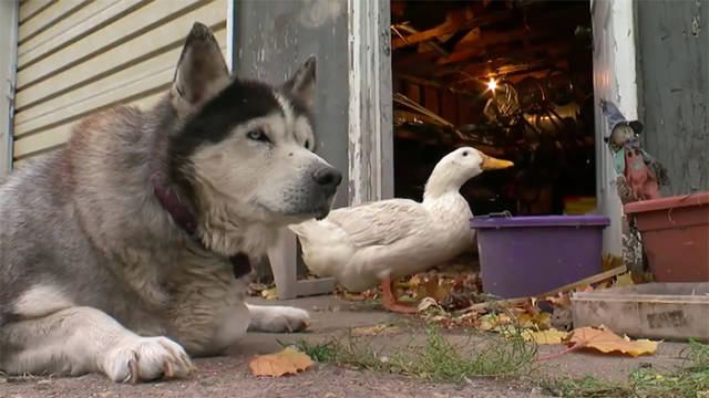 Nature Is Very Inventive When It Comes To Unlikely Friendships Between Animals
