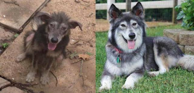 When Animals Are Adopted – Everything Changes In This World