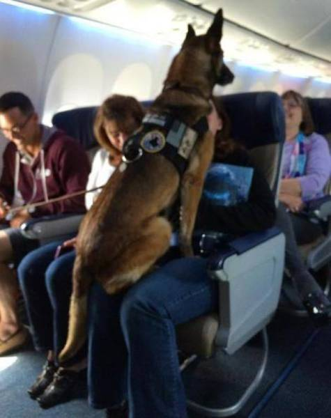These Are The Best Airplane Passengers