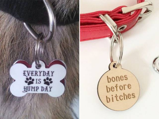 These Pets Are Carrying Some Nice Humor On Their Collars