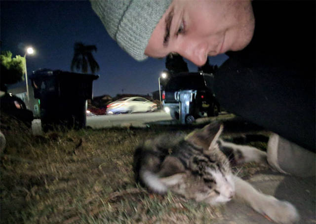 That's How You Become Friends With A Street Cat