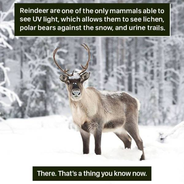 """Nature Always Has Some Material For """"Wait, What?!"""""""