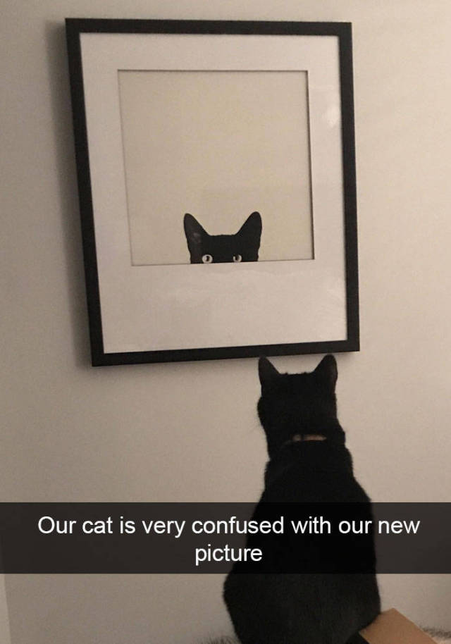 Snapchat Was Apparently Created For Cats