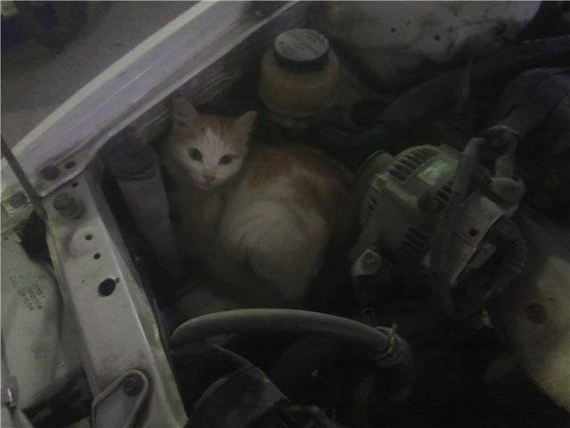 You Should Look Under Your Car's Hood Once In A While. There Could Be Something Interesting Waiting For You