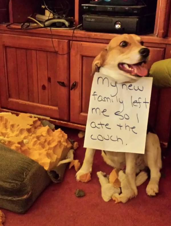 Dogs That Are Very, Very Guilty