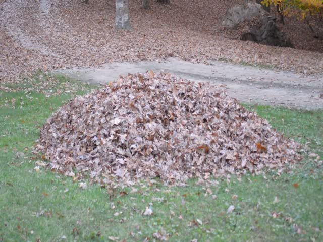 An Unexpected Surprise In A Pile Of Leaves