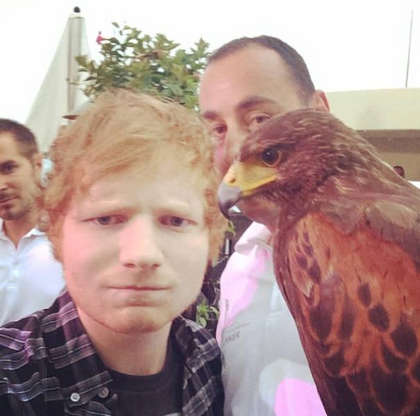 how to get fan presale for ed sheeran 2017
