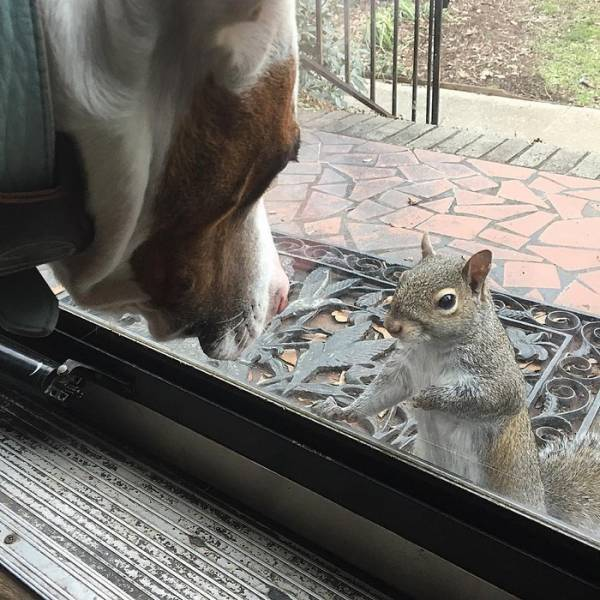 This Squirrel Never Forgot Who Saved Her Life