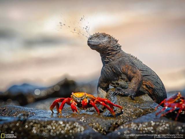 Winners Of The 2017 Nat Geo Nature Photographer Of The Year Contest Are Beyond Any Expectations