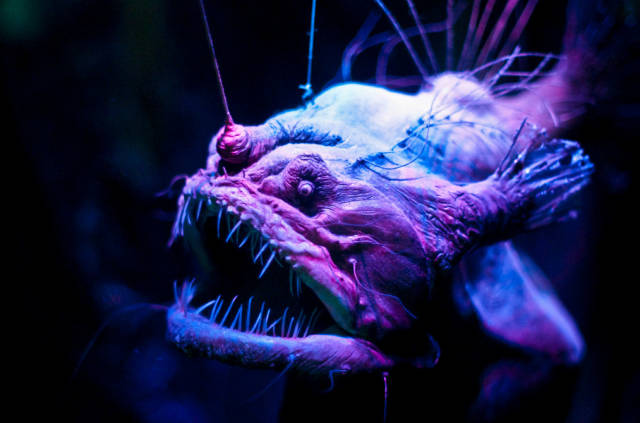Deep Waters Hide Some Bizarre Creatures