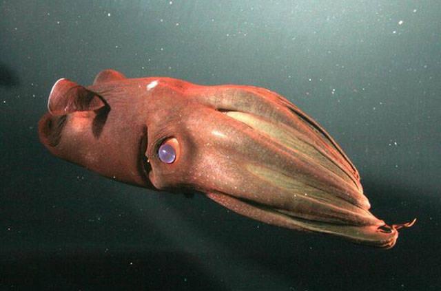 Deep Waters Hide Some Bizarre Creatures