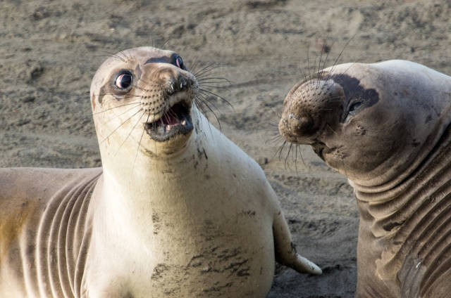 There's A Lot Of Comedy In Wildlife, And These Photo Awards Prove It