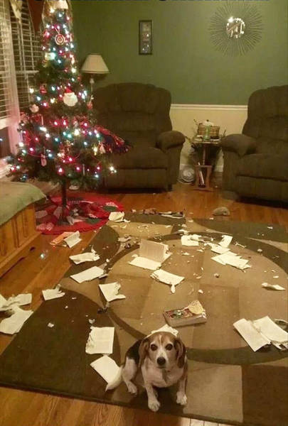 Cats And Dogs Hate Christmas Decorations So Much!