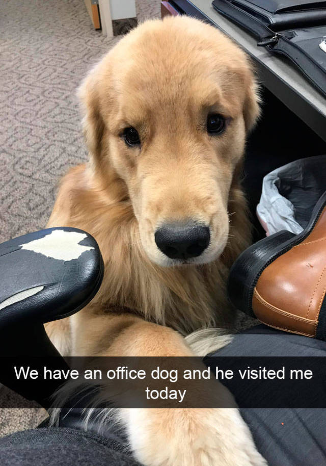 Dogs Always Look Good On Snapchat