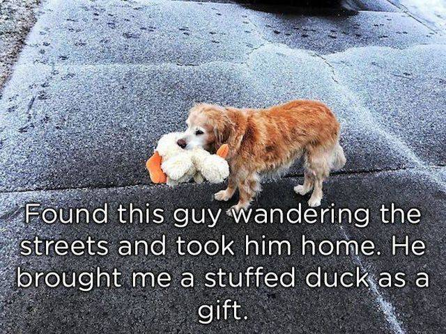 Pets Absolutely Love Bringing Gifts To Their Owners