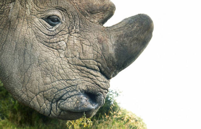 These Animals Are Endangered And Are Can Soon Die Out