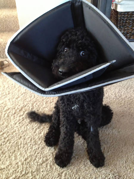 Pets Who Just Came Back From The Vet, And Their Hilarious Reactions