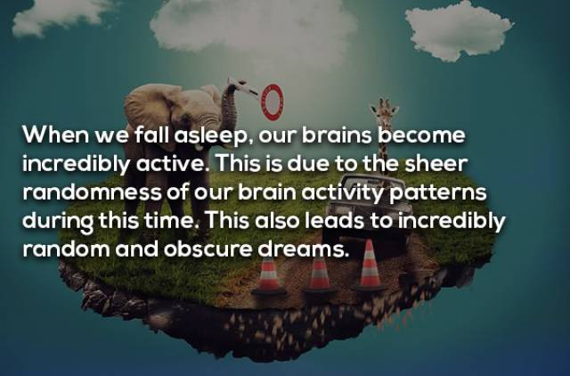Sleepy Facts We Know About Dreaming