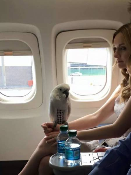 You Wouldn't Expect To See Them On Your Flight…