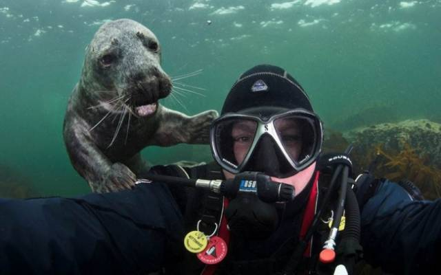 Animals Are Known For Photobombing In Style
