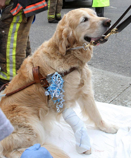 Dogs Can Be Even More Heroic Than Some Humans!